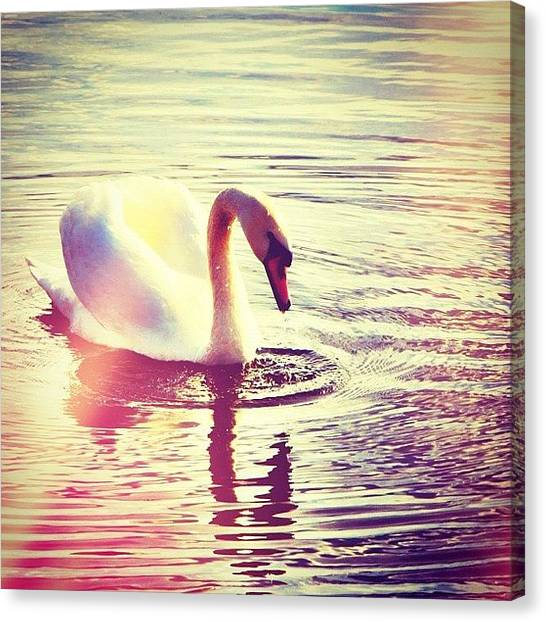 Swans Canvas Print - #art #tweegram #instagood #iphonesia by Thomas Johansen