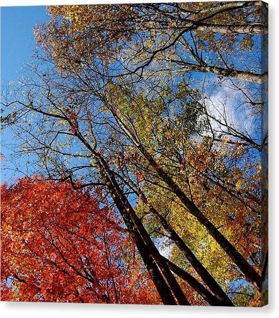 Forest Canvas Print - Autumn Leaves - Nc by Joel Lopez