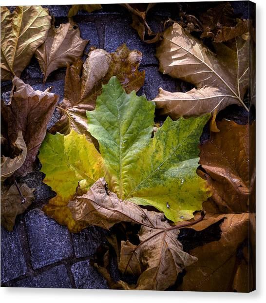 Fallen Tree Canvas Print - Autumn Leaves by Joana Kruse