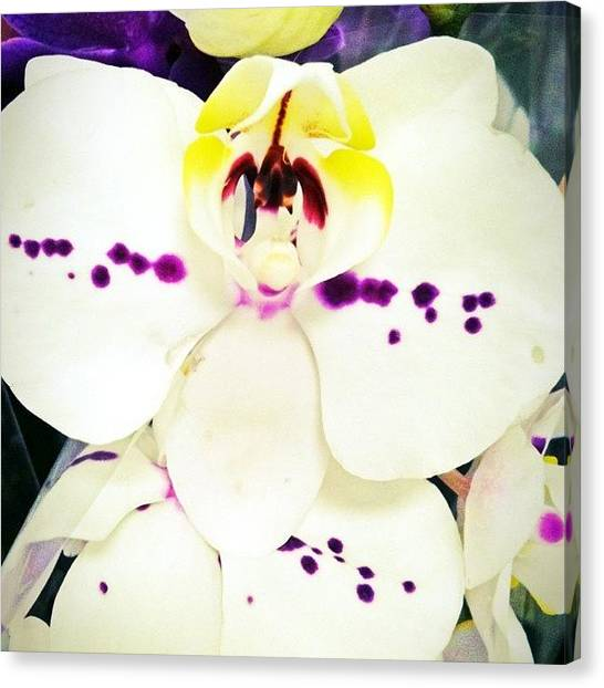 Orchids Canvas Print - #beauty #flower #iphonesia by Sherri Galvan
