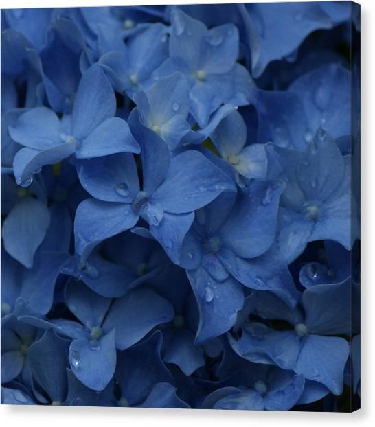 Blue Dew Canvas Print