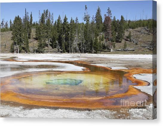 Yellowstone Caldera Canvas Print - Chromatic Pool Hot Spring, Upper Geyser by Richard Roscoe