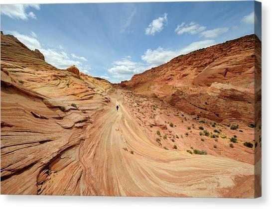 Arizona Coyotes Canvas Print - Coyote Buttes by David Hogan