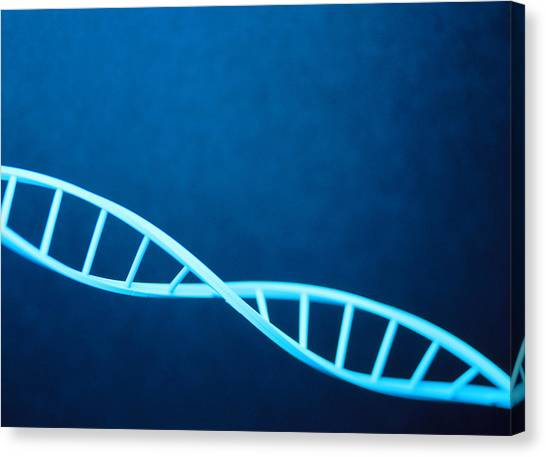 Dna Helix Canvas Print by Lawrence Lawry