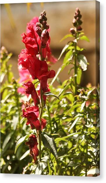 Flower Canvas Print by Amr Miqdadi