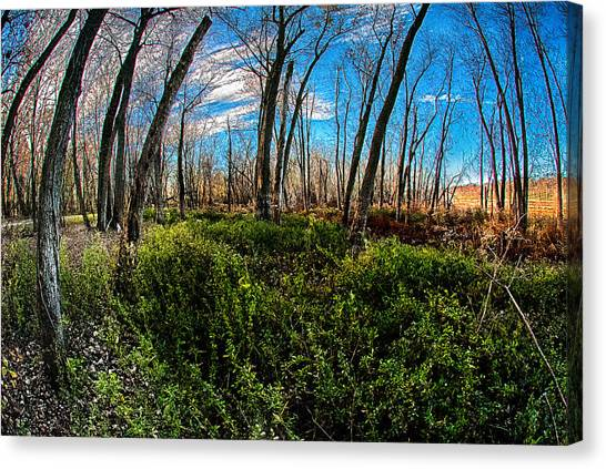 Illinois River Bottoms Canvas Print