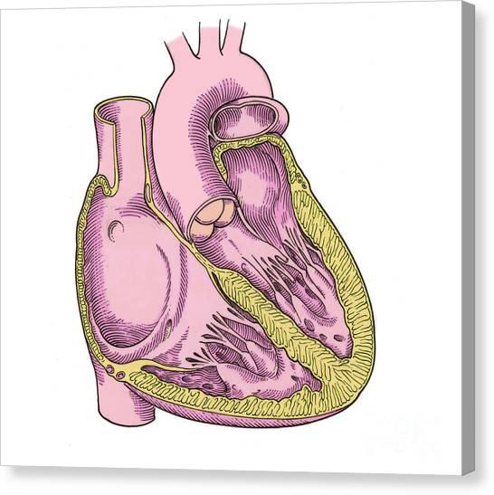 Right Coronary Artery Art Fine Art America