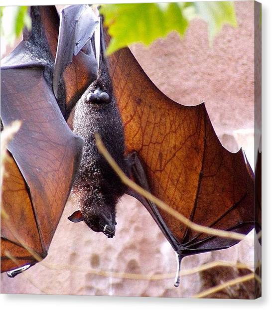 Bat Canvas Print - Instagram Photo by Harold Coombs III