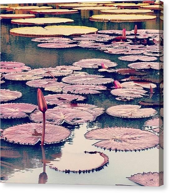 House Canvas Print - #instahub #instagood #instamood by Tommy Tjahjono