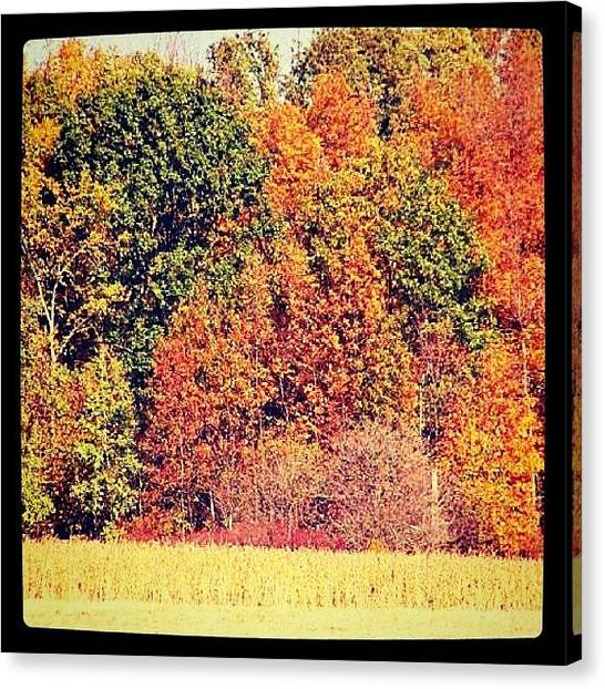 Harvest Canvas Print - #iphonesia #iphoneography #instadaily by Sherri Galvan