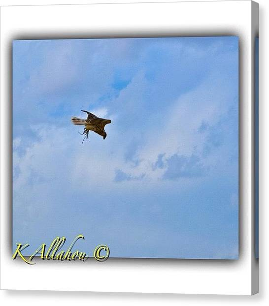 Hawks Canvas Print - #kuw #kuwaitna #q8 #q8magic by Khalid Allahou