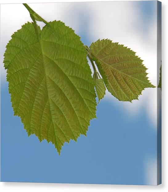 Leaf Canvas Print by Design Windmill