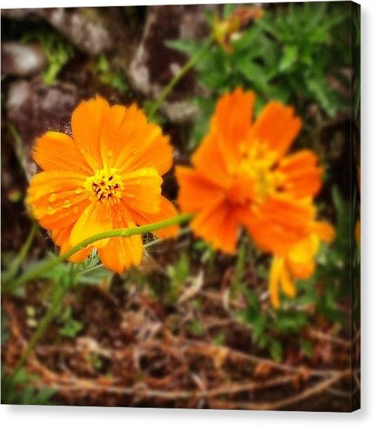 Gym Canvas Print - #macro_flower #macrogardener by Christina Pabustan