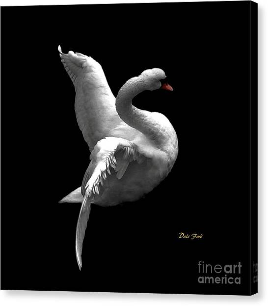 Majestic Swan 2 Canvas Print