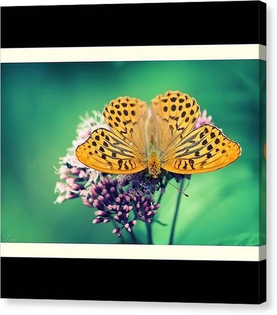 Grasshoppers Canvas Print - #mymacrodiary #macromantic #macromatic by Leni Papilio