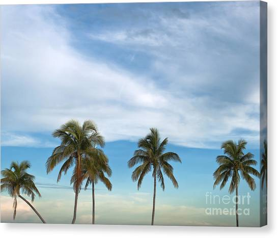 Tropical Plant Canvas Print - Palm Trees by Blink Images