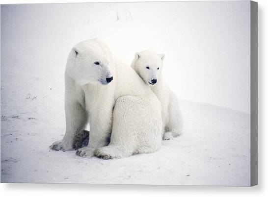 Care Bears Canvas Print - Polar Bear And Cub by Chris Martin-bahr