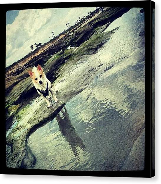 Cool Canvas Print - Rocko by Mandy Shupp