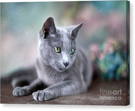 Cats Canvas Print - Russian Blue by Nailia Schwarz