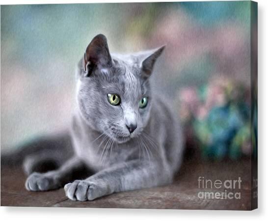 Russian Canvas Print - Russian Blue by Nailia Schwarz