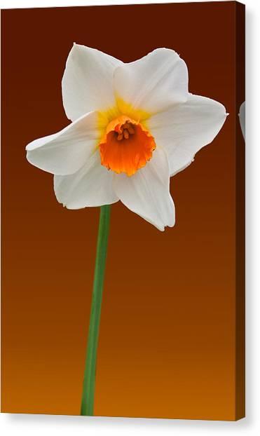Spring Bulb Canvas Print
