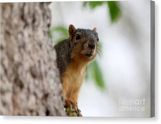Canvas Print - Squirrel by Lori Tordsen