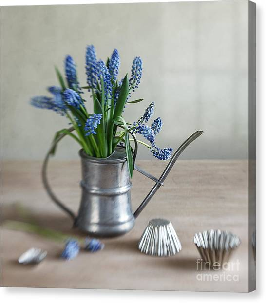 Metal Canvas Print - Still Life With Grape Hyacinths by Nailia Schwarz