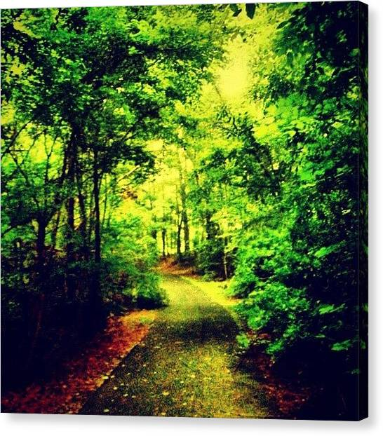 Forest Paths Canvas Print - Trees by Katie Williams