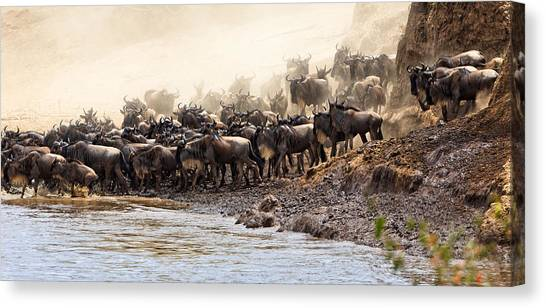 Canvas Print featuring the photograph Wildebeest Before The Crossing by Perla Copernik