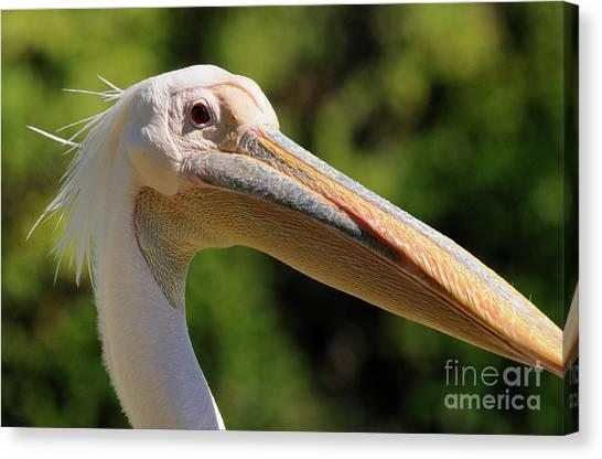 Pelican Canvas Print by Marc Bittan