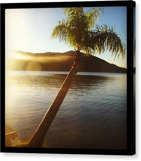 Palm Trees Canvas Print - Instagram Photo by Avatar Pics