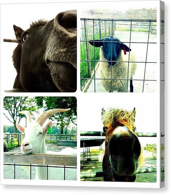 Horse Farms Canvas Print -  by Asagi Miu
