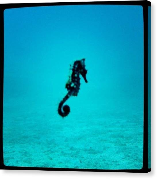 Scuba Diving Canvas Print - Instagram Photo by Kali Stara