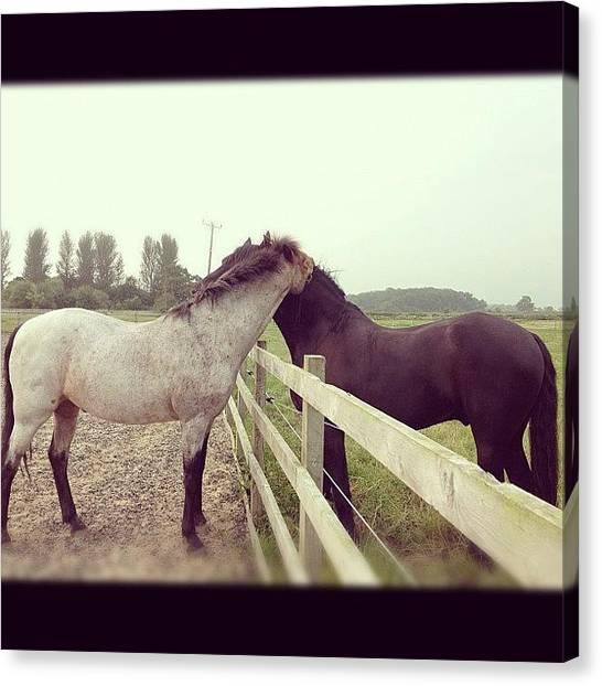 Ponies Canvas Print - Instagram Photo by Caitlin Hay