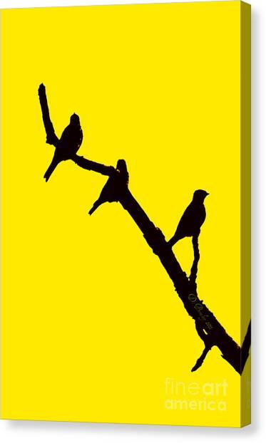 3 Birds On A Limb Canvas Print