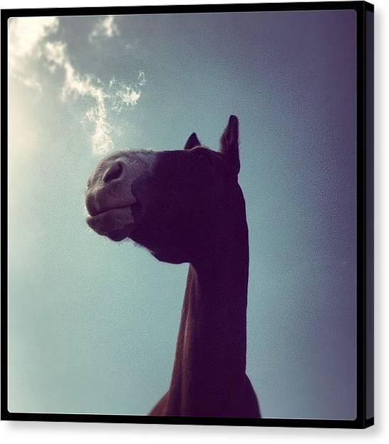 Hunting Canvas Print - Bubba :* #horses #hunters #sky #grass by Caitlin Hay