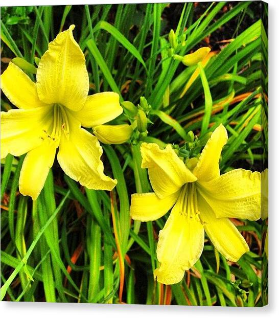 Lily Canvas Print - Daylily Flower by Irina Moskalev