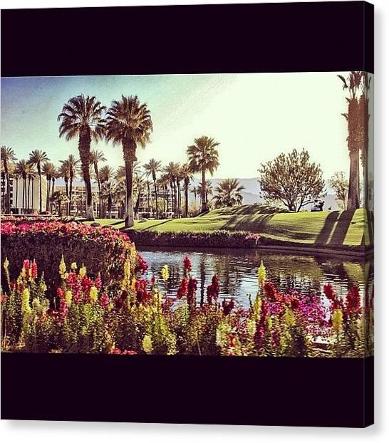 Flamingos Canvas Print - #desert #resort #marriott #paradise by Skip Jensen