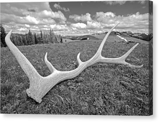 Elk Canvas Print by Elijah Weber