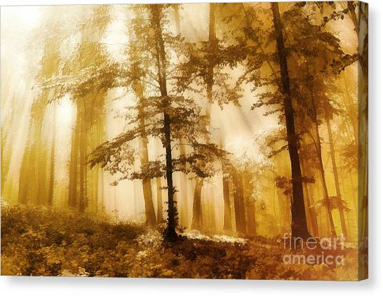Golden Forest  Canvas Print by Odon Czintos