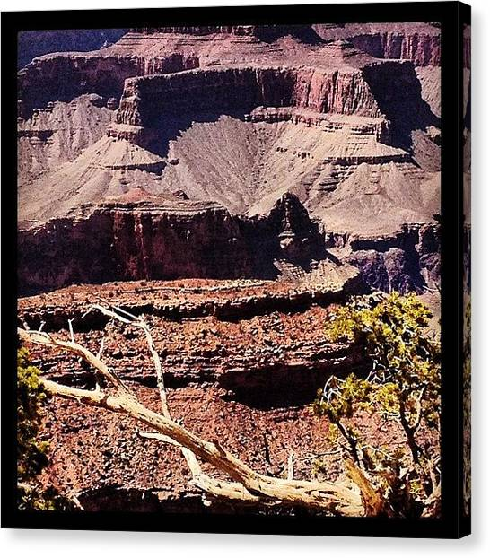 Old Age Canvas Print - Grand Canyon by Isabel Poulin