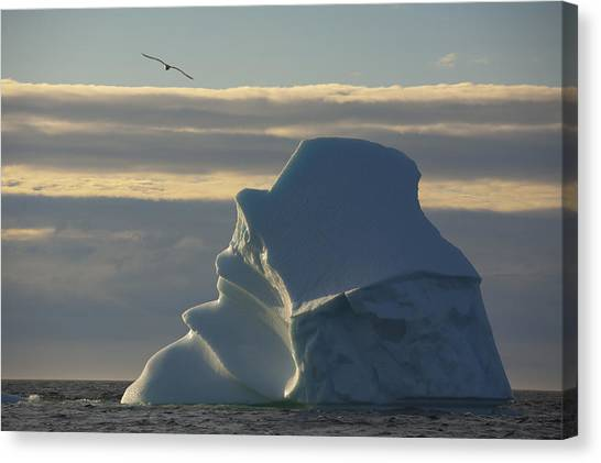 Newfoundland And Labrador Canvas Print - Icebergs Off Coast Of Fogo Island by John Sylvester