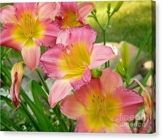 3 Lillies Canvas Print