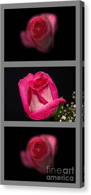 3 Little Roses Canvas Print