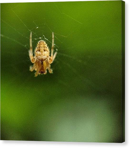 Spiders Canvas Print - #macro #macrogardener #macroworld by Sooonism Heng