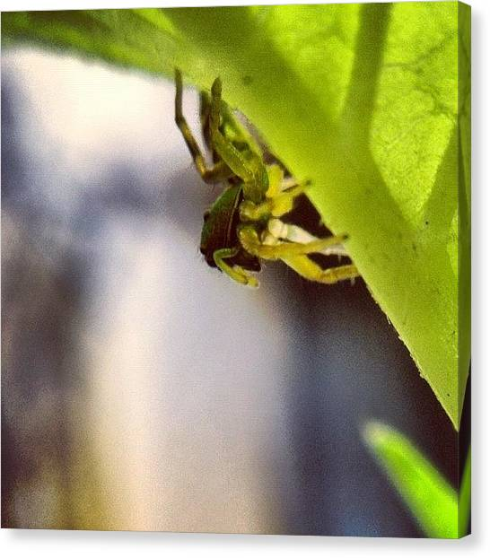 Spiders Canvas Print - #nature #water #leaf #macro by Sooonism Heng