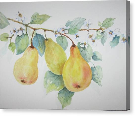 3 Pears Canvas Print