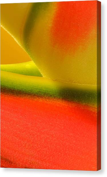 Photograph Of A Lobster Claws Heliconia Canvas Print