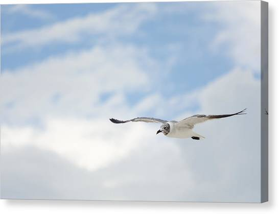 Seagull Canvas Print by Mike Rivera