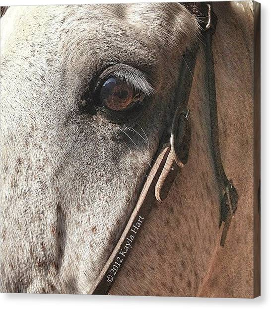 Saddles Canvas Print - #snapseed #iphone4s #iphonesia by Kayla Hart